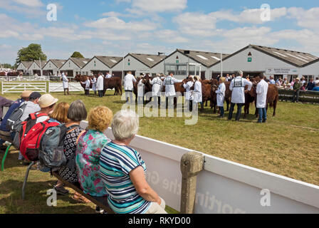 Cattle judging at the Great Yorkshire Show. - Stock Image