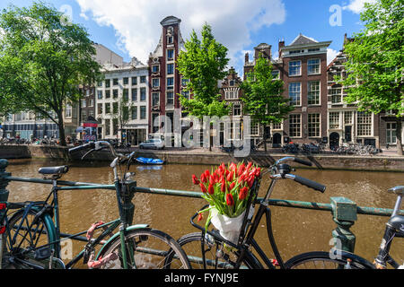 Amsterdam Single Gracht bicycle with tulips, Amsterdam, Netherlands - Stock Image