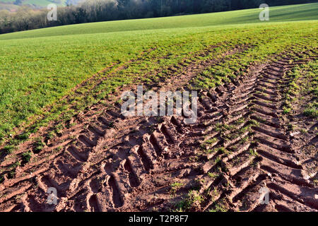 Tractor tire tread tracks in soft soil in agricultural field - Stock Image