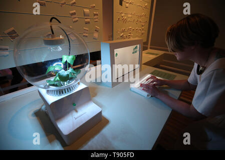 UK based designer and researcher Helene Steiner demonstrates 'Project Florence', which involves communicating digitally with a plant using nature's own language, electro-chemical signals, at the FOOD: Bigger than the Plate exhibition at the Victoria and Albert Museum in London. - Stock Image