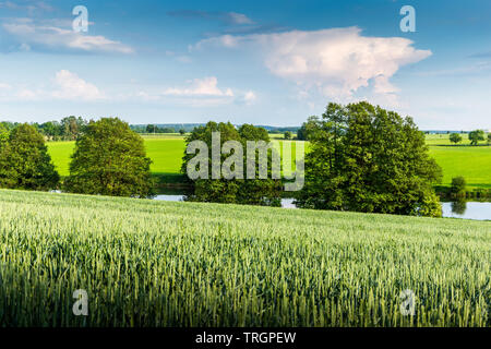 Scenic view of the green grass field and a dramatic sky. - Stock Image