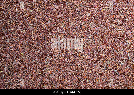 Pattern  of wild red rice. Top view. - Stock Image