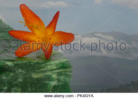 Wildflower with mountains in the background - Stock Image