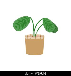 Ctenanthe potted flat icon, indoor plant, flower vector illustration isolated on white background - Stock Image