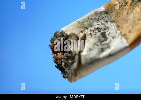 One burnt cigarette macro shot isolated background - Stock Image