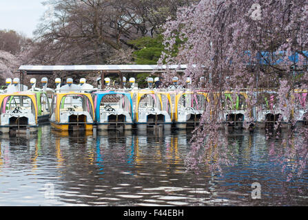 Colorful swan boats docked with cherry blossom sakura in foreground - Stock Image