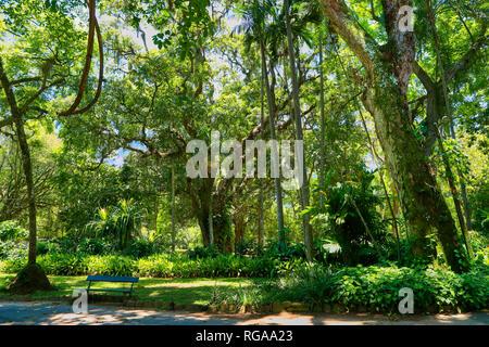 Botanical garden. Landscape.  Rio de Janeiro. Brazil - Stock Image