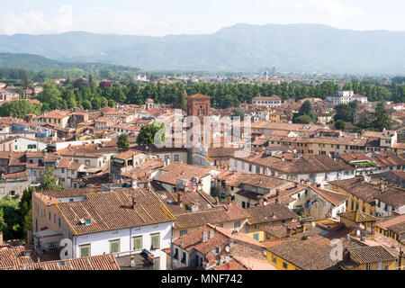 View from the top of the Torre Guinigi, Lucca, Tuscany, Italy, Europe - Stock Image