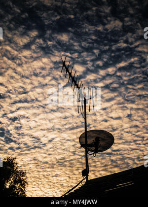 staellite dish tv aerial roof - Stock Image