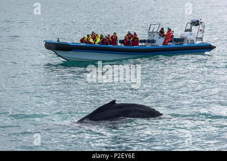 Boat, Whale Watching, Skjalfandi, Husavik, Bay, Iceland, Europe - Stock Image