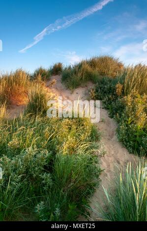 A path leading through the marram grass to the top of a sand dune at sunrise - Stock Image
