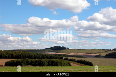 Dorset countryside near Saalisbury - Stock Image