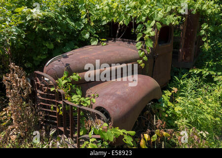rusty truck embedded in foliage - Stock Image