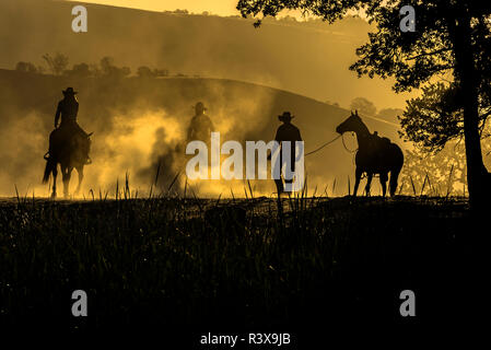 USA, California, Parkfield, V6 Ranch silhouette of riders, on horseback. Early dusty morning. (MR) - Stock Image