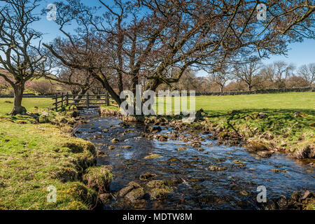 North Pennines Landscape, Crossthwaite Beck near Middleton in Teesdale in spring - Stock Image