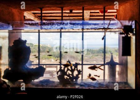Aquarium in the window of small tavern Refugio del Águila next to the Mirador del Aguila Bunker, Mallorca, Balearic Islands, Spa - Stock Image