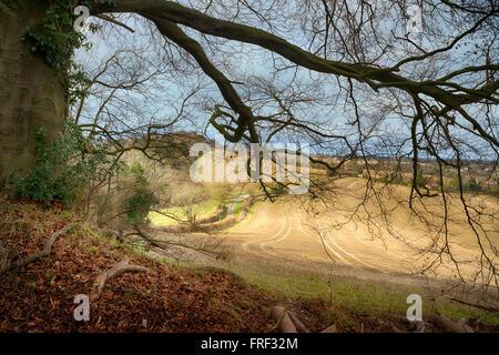 Chiltern landscape at Saunderton near West Wycombe, Buckinghamshire, England - Stock Image