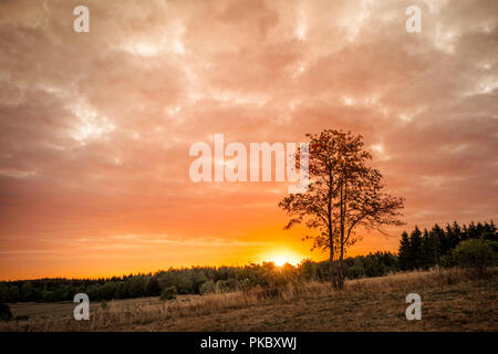 Tree silhouette in the sunrise on a golden sky over land with fields and trees - Stock Image