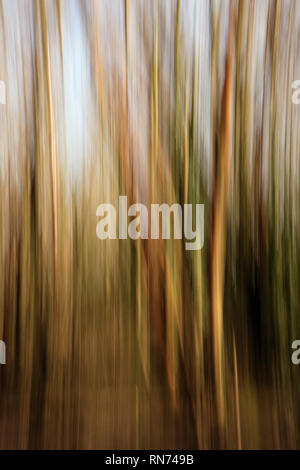 Trees in abstract. England UK - Stock Image