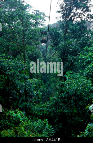 The Canopy of the Costa Rica Rainforest, Braulio Carrillo National Park, Costa Rica, South America - Stock Image