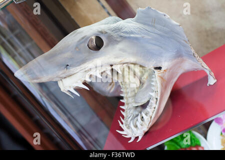 Shark head with skin dried on bone - Stock Image