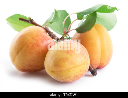 Three ripe apricots isolated on the white background. - Stock Image
