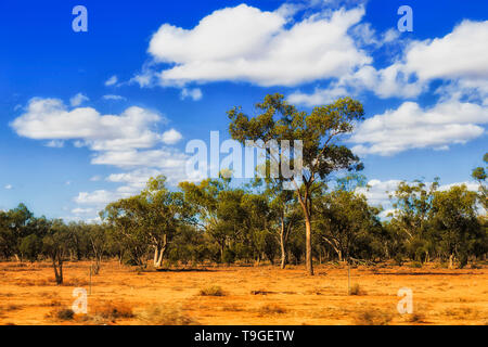 Arid plains of Australian outback with dry red soil and scarce gum-trees under blue sky surviving harsh Australian climate in remote part of NSW. - Stock Image
