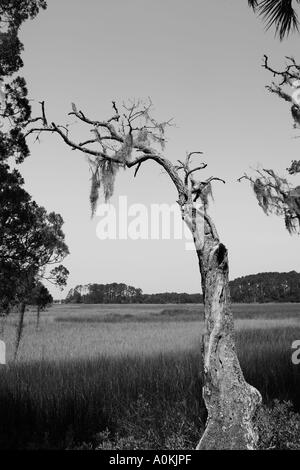 Tree with moss in wetland outside of Savannah Georgia, USA.. - Stock Image