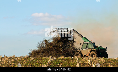 Farmer burning crop residue on bonfire to dispose of waste plant material and help kill insects. - Stock Image