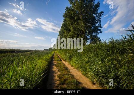 Countryside Dalmatia Croatia - Stock Image