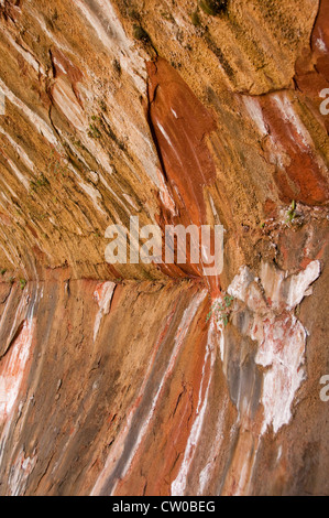 USA Utah, Zion National Park. Weeping Rock land form, with water oozing out of the mountain side. - Stock Image