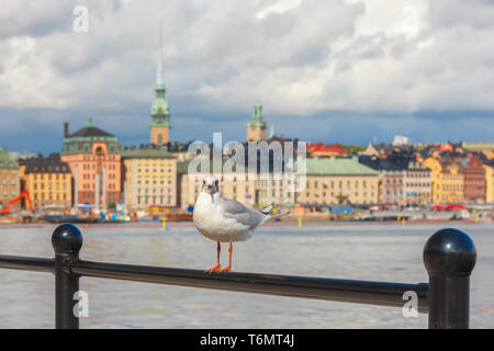 Seagull in Stockholm, Sweden - Stock Image