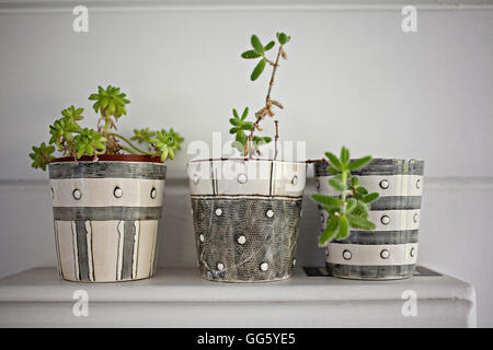 Potted plants on table at home - Stock Image
