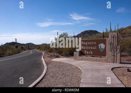 Usa, Arizona, Tucson, Saguaro National Park, west section. - Stock Image
