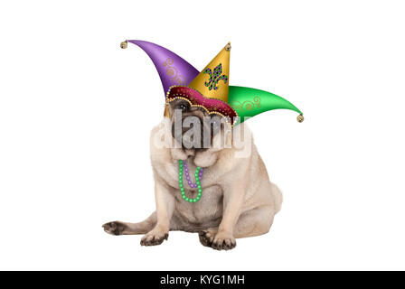 cute grumpy Mardi gras carnival  pug puppy dog sitting down with harlequin jester hat, isolated on white background - Stock Image