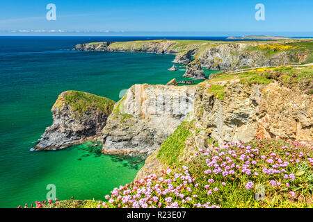 Flowers on the clifftop at the Bedruthan Steps near Carnewas in North Cornwall, England - Stock Image