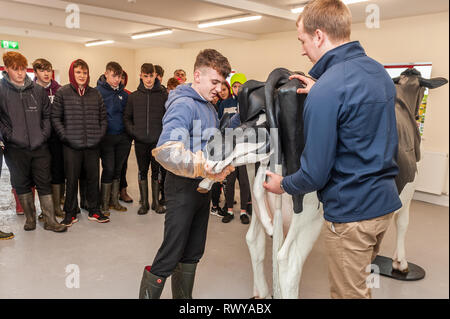Clonakilty, West Cork, Ireland. 8th March, 2019. Gavin Crowley from Skibbereen attended the Darrara Agricultural College Open Day and was invited by teacher James Daunt to assist a Veterinary Simulator cow to give birth. Darrara is the only agricultural college in Ireland to have a simulator. Credit: Andy Gibson/Alamy Live News. - Stock Image