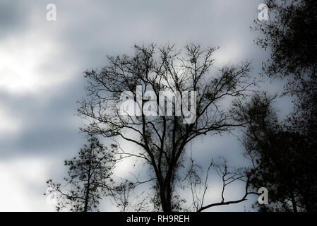 Moody January Winter Sky in North Florida. - Stock Image