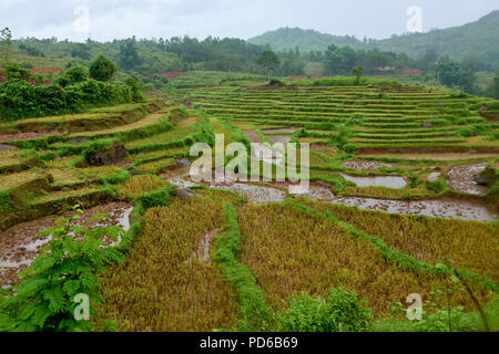 Tightly cropped shot of levelled rice paddies on hillside in Hoa Binh region of North Vietnam. - Stock Image