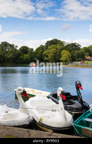 Swan-themed pedalo hire boats on the boating lake in Saltwell Park, Gateshead, Tyne and Wear. - Stock Image