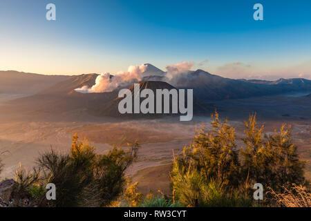 Sunrise view of the Bromo, Batok and Semeru volcanoes, Tengger Caldera, East Java, Indonesia - Stock Image