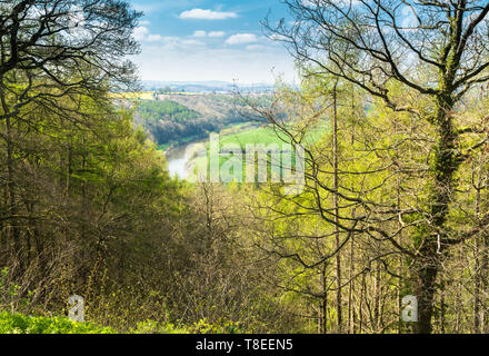 River Wye meandering through the Herefordshire countryside, Brockhampton UK. April 2019 - Stock Image