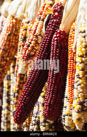 colorful Indian corn display hanging from a rural farm stand - Stock Image