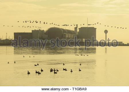 Candu nuclear power station generating electricity with Canada Geese beside Lake Ontario at Pickering Ontario Canada - Stock Image