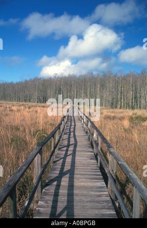 Florida long boardwalk corkscrew swamp - Stock Image