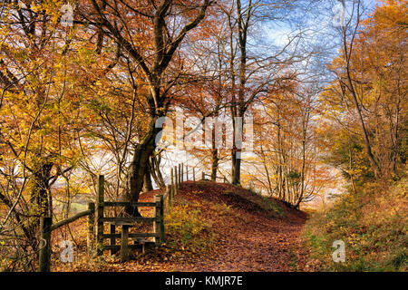 Autumn at Pulpit Wood, Chilterns AONB, Buckinghamshire, England, UK - Stock Image