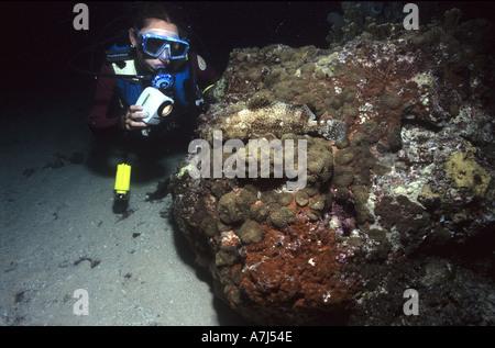 Night Dive Corals - Stock Image