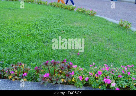 Beautiful evergreen lawn and flowers growing on the edge of the lawn, landscaping public Park in the open, Sunny morning. - Stock Image