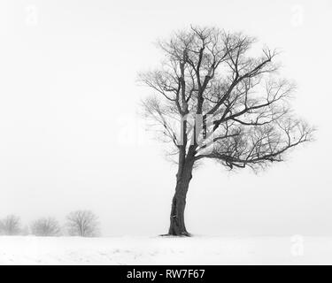 Bare Tree on Hilltop during Winter Snow Storm - Stock Image