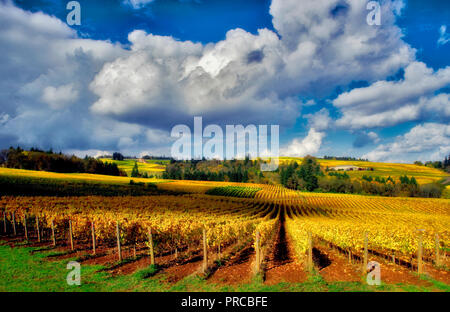 Fall colored grapes and cumulous clouds. Sokol Blosser Vineyards. Oregon - Stock Image